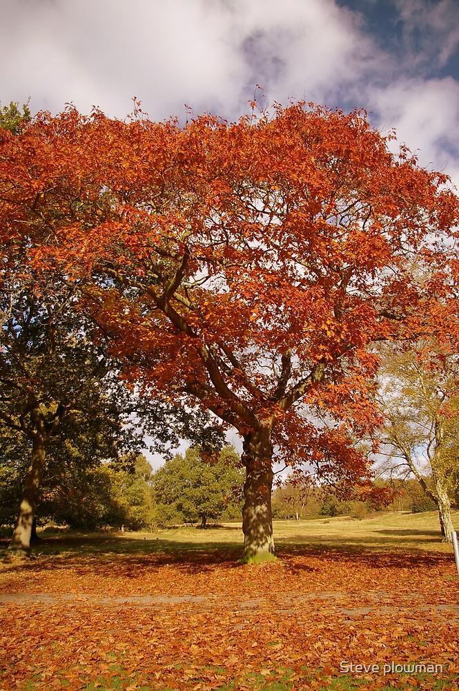 Golden tree by Steve plowman