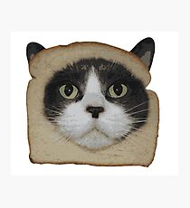 Breaded Inbread Cat Breading Photographic Print