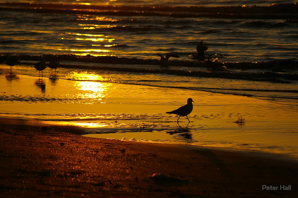Golden Sand by Peter Hall
