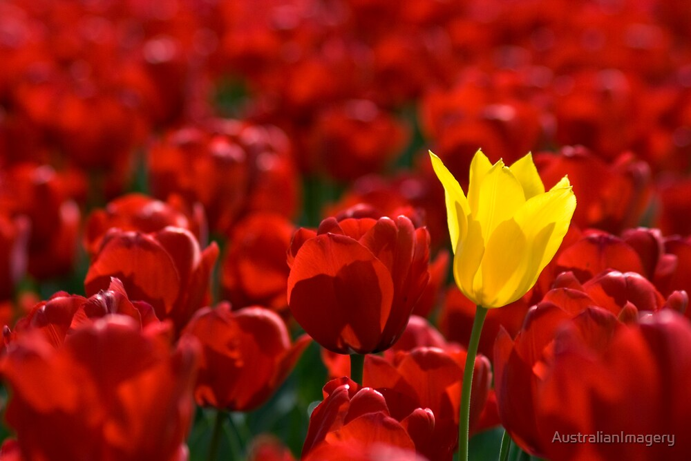 Alone in a crowd by AustralianImagery