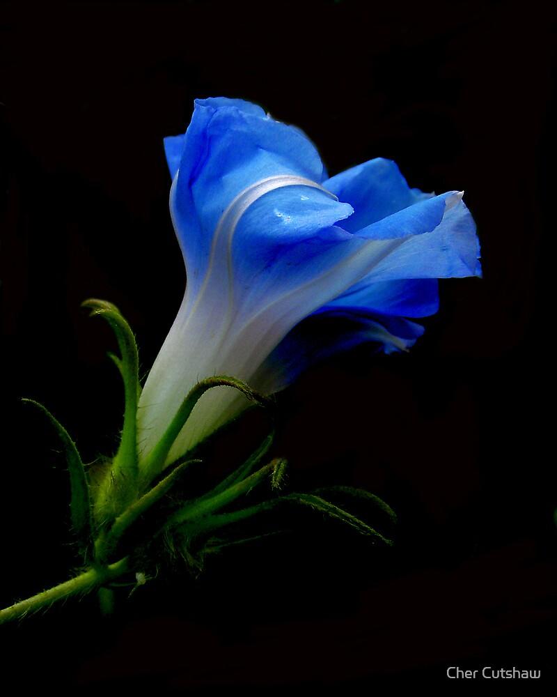 Burst of Blue by Cher Cutshaw