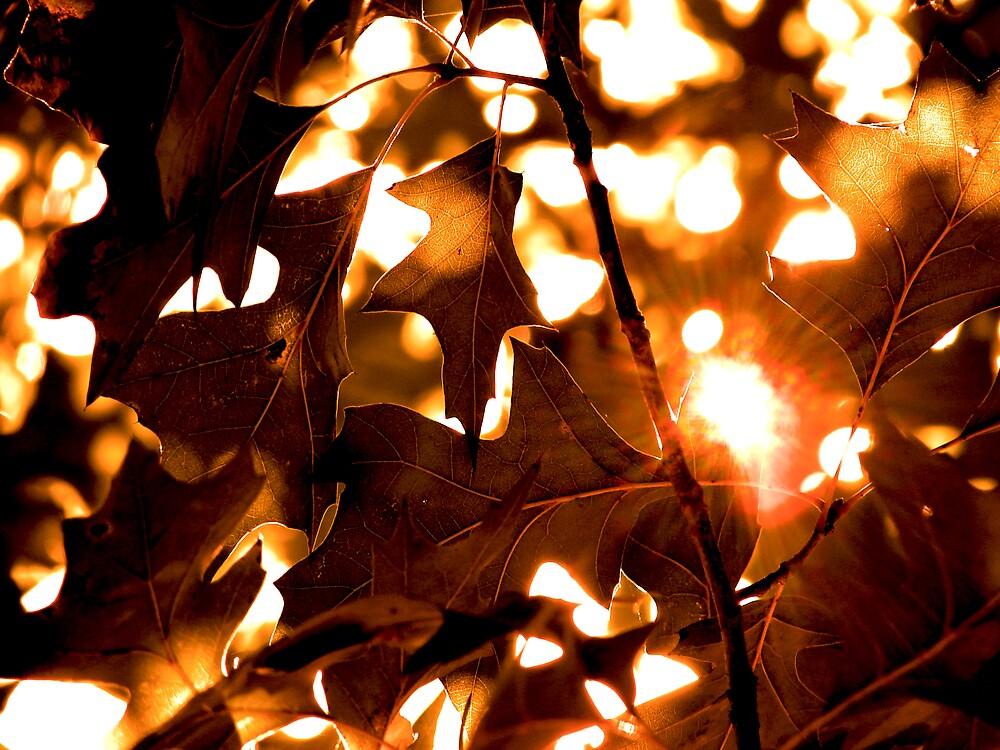 Autumn Joy by seagrl44