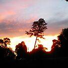 sunset pine II by Robin Harrison