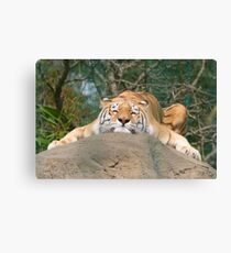 Totally chilled out! Canvas Print