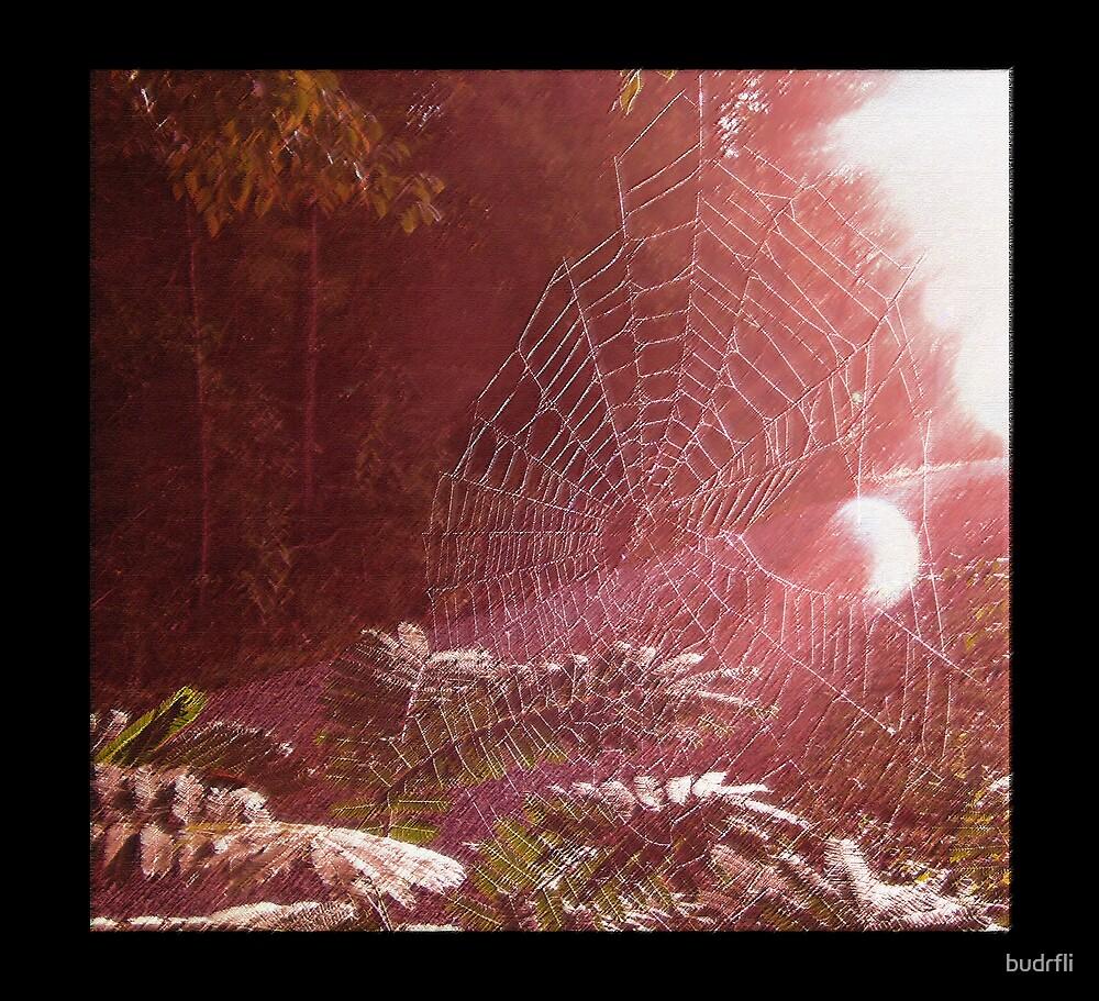 light webbing by budrfli