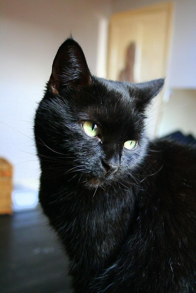 black cat by DigitalRebel