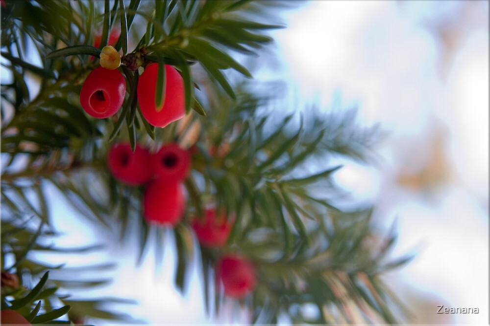 Merry Christmas! by Zeanana