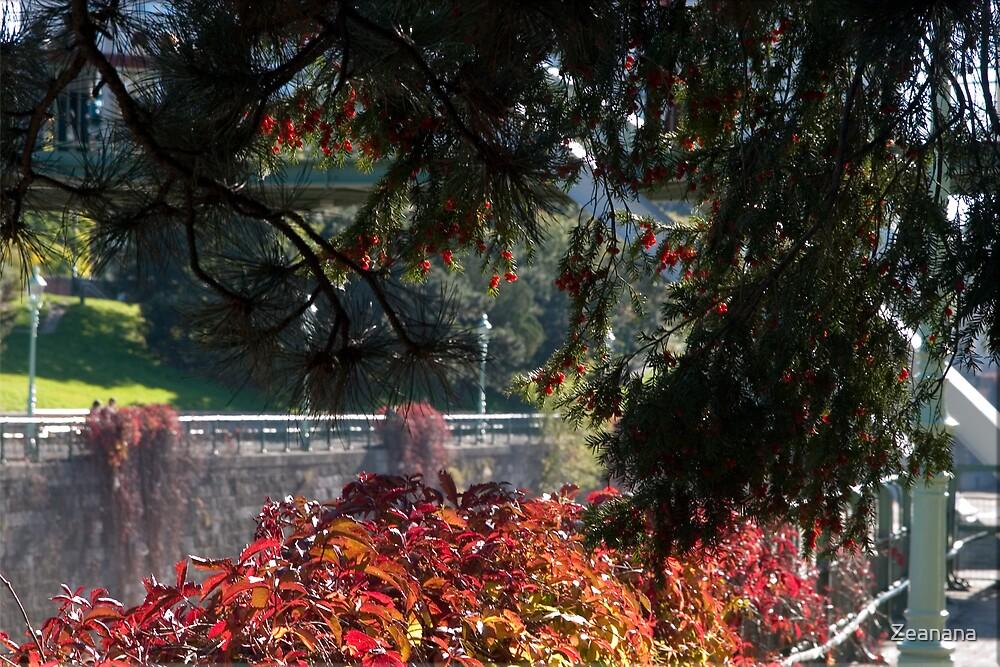 Autumn Window by Zeanana