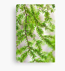 Botanical Hemlock Canvas Print