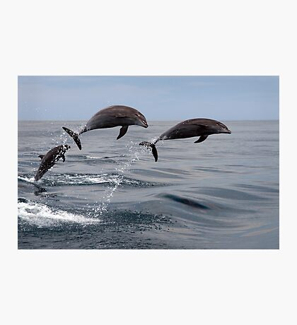 Jumping Dolphins Photographic Print
