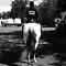 Competiton Horses