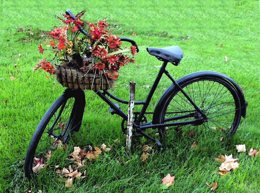 Bicycle Basket by nikspix