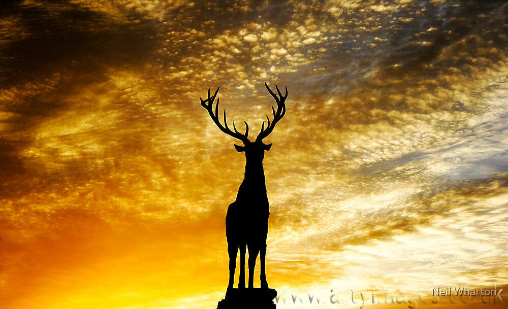 Stag by Neil Wharton