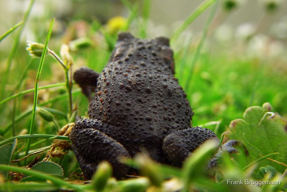 Toad by Frank Brüggemann