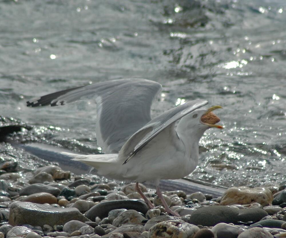 Gull by Catherine Brock