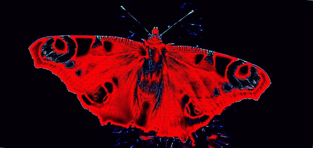 Butterfly Beauty by kitlew