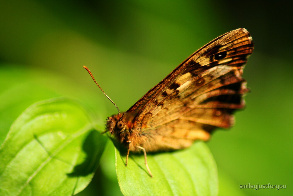 Butterfly2 by smileyjustforyou