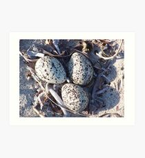 pipers nest Art Print