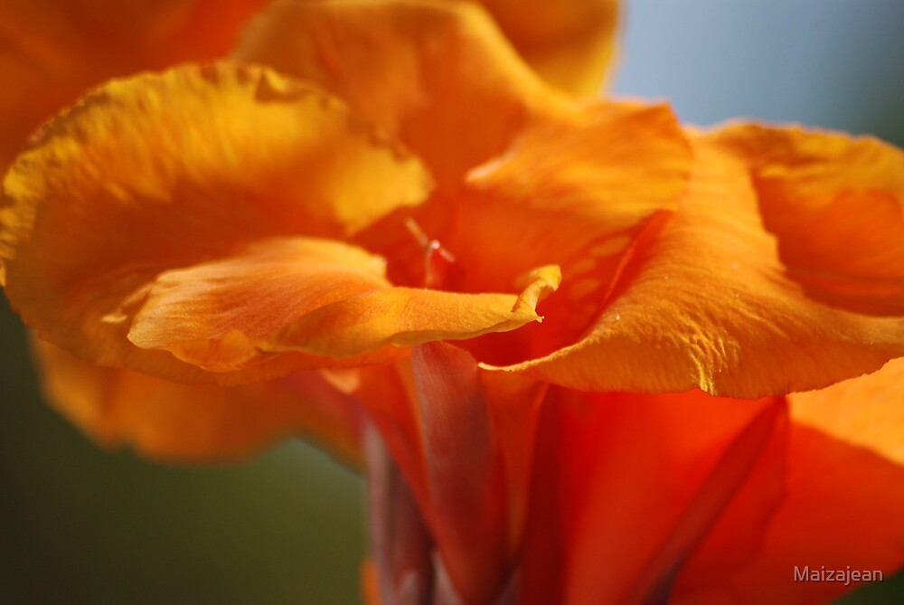 Orange Canna Flower by Maizajean