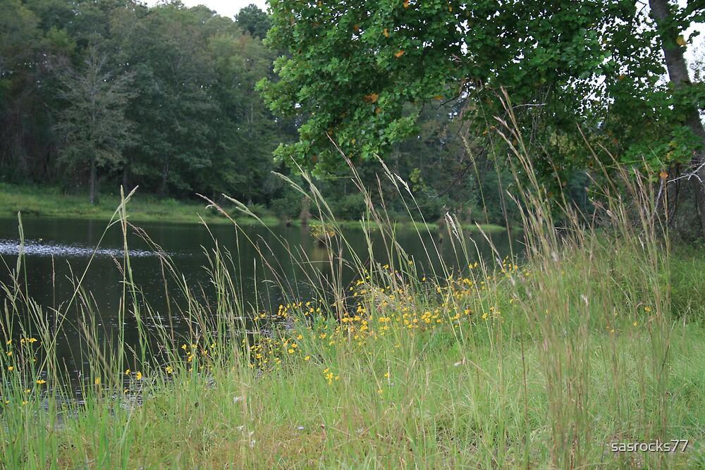 pond life by sasrocks77