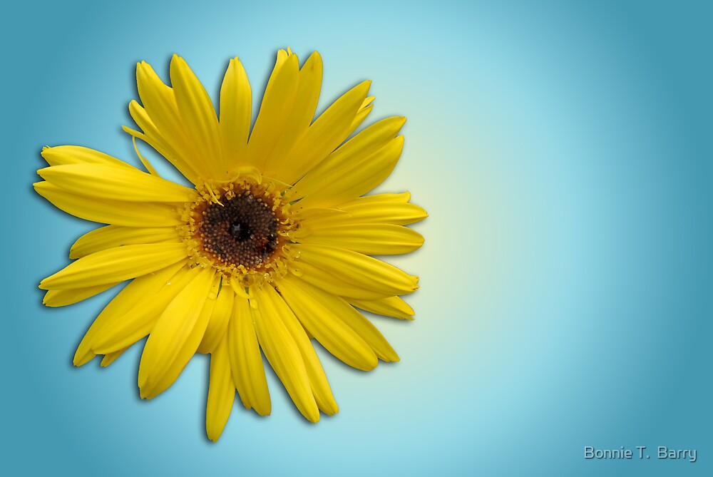 Golden Daisy on Powder Blue by Bonnie T.  Barry