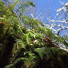 snowy Oregon ferns in trees by Dawna Morton