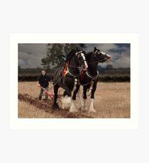 Horse ploughing  Art Print