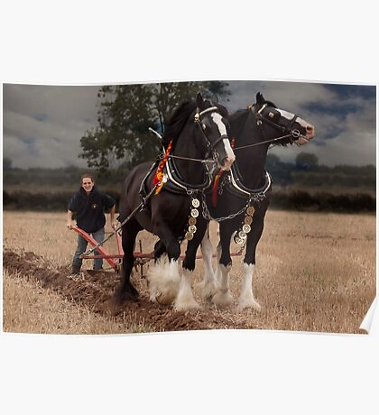 Horse ploughing  Poster