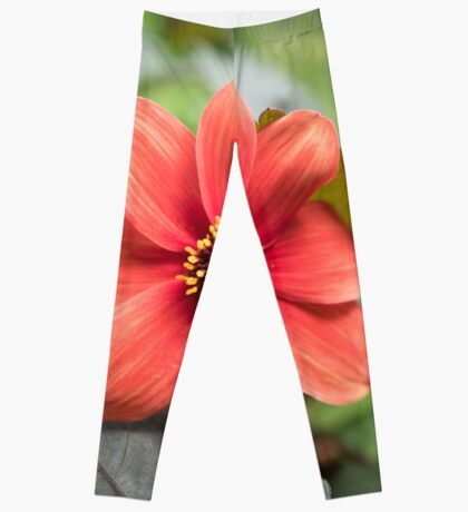 A Peachy Dahlia Leggings