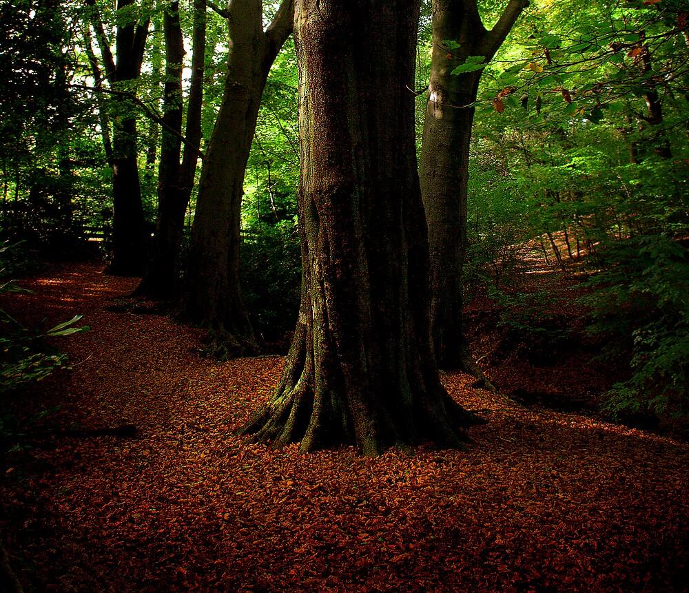 autumn in euxton by DigitalRebel