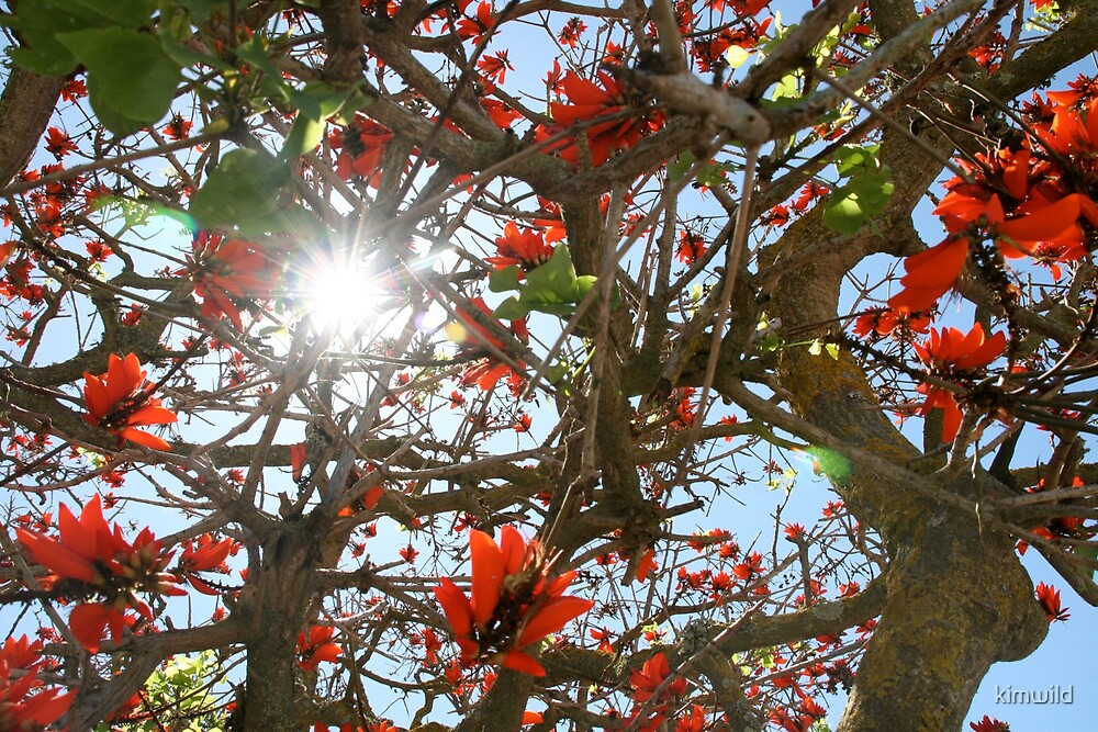 Flower light by kimwild