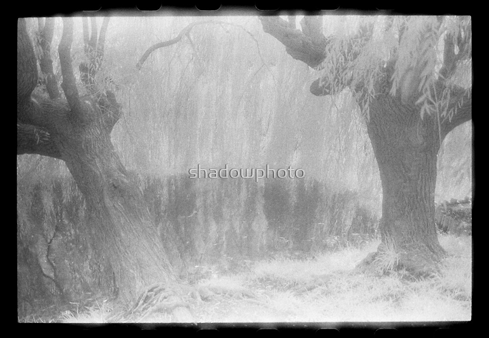 Infrared, 2006 by shadowphoto