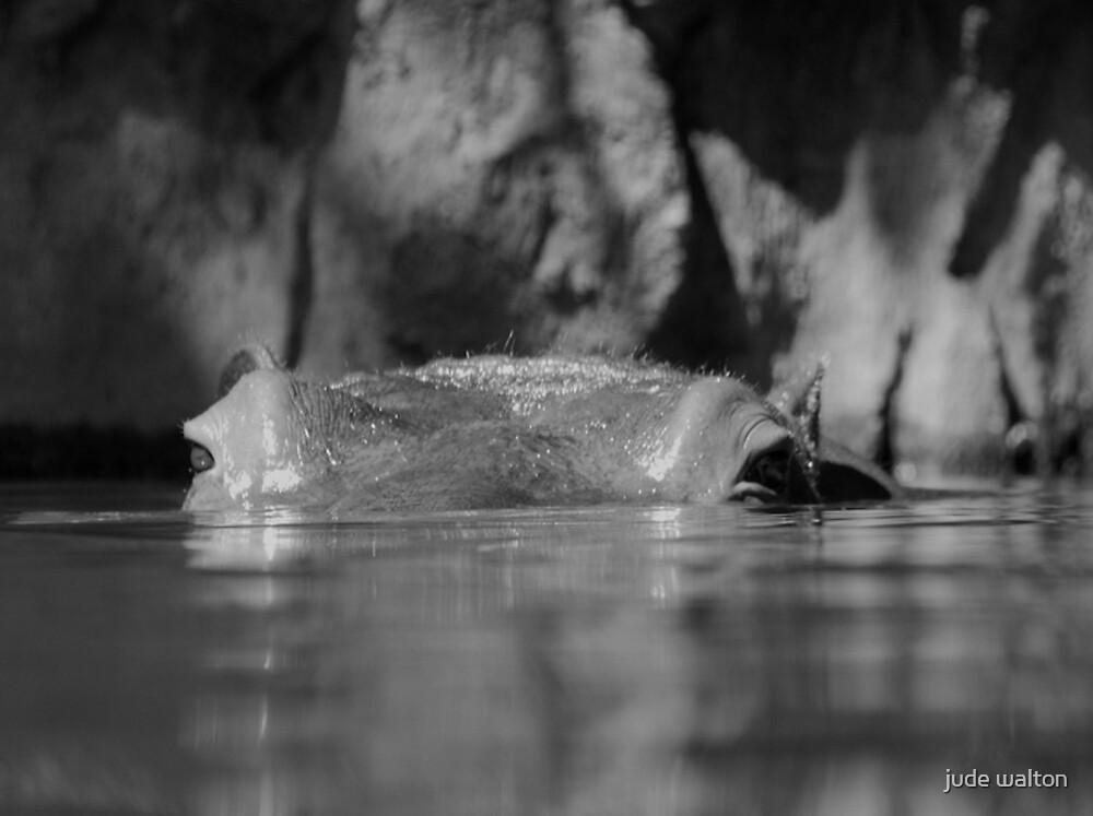 water eyes by jude walton