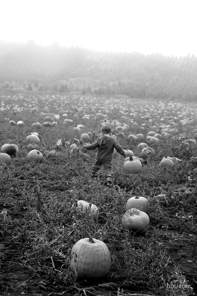 The Perfect Pumpkin by hosierar