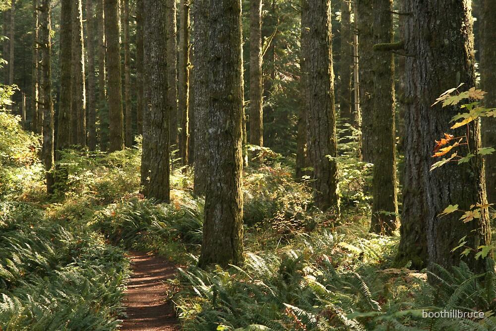 Oregon Forrest by boothillbruce