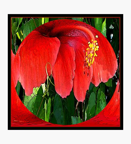 Red Hibiscus Introverted Photographic Print