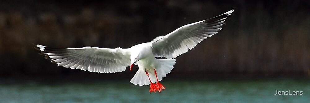 Gull 001 by JensLens