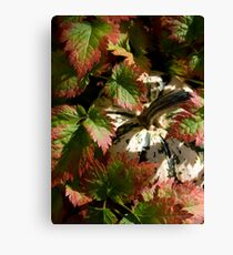 Astilbe Leaves & Gourd Canvas Print