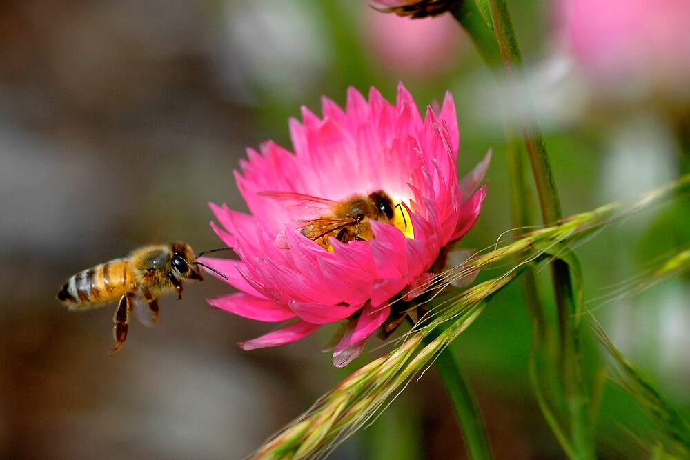 To bee or... by samatar