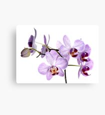 Orchid Light 6 Canvas Print
