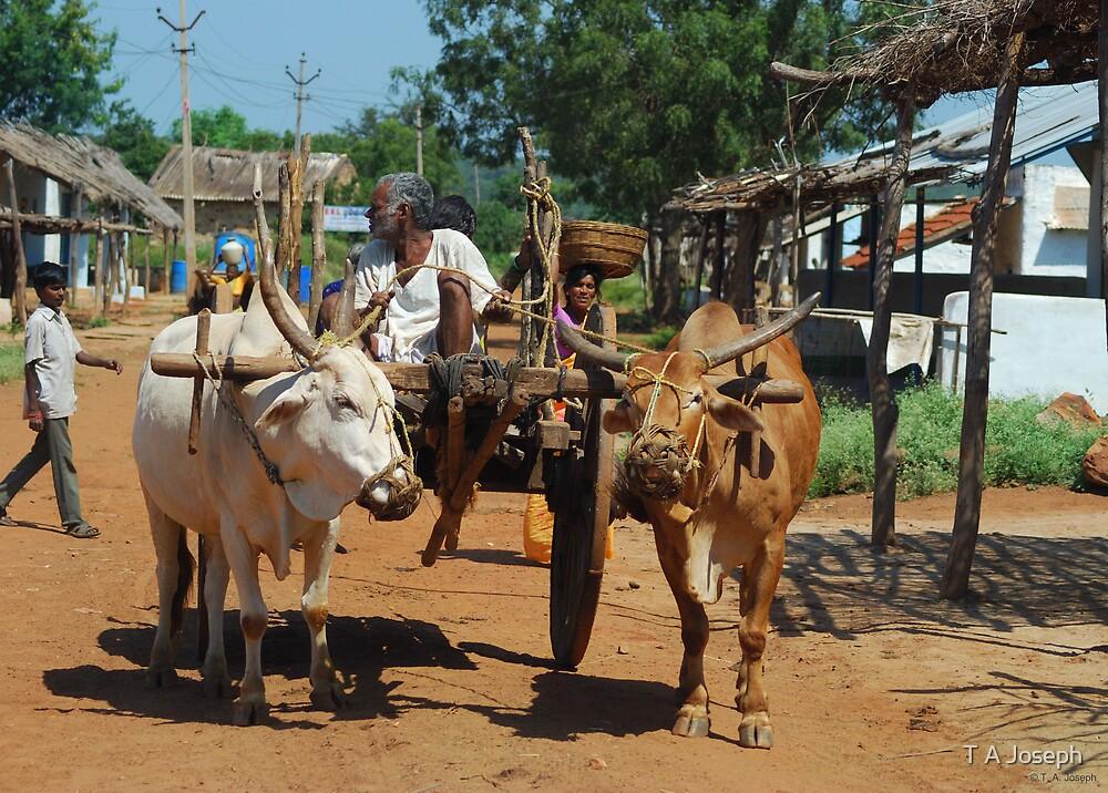 Bullock Cart by T A Joseph