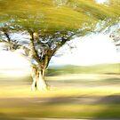 Tree - Lightpainting by hinting
