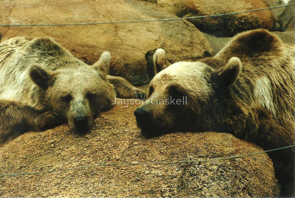 Let sleeping bears lay by Jayson Gaskell