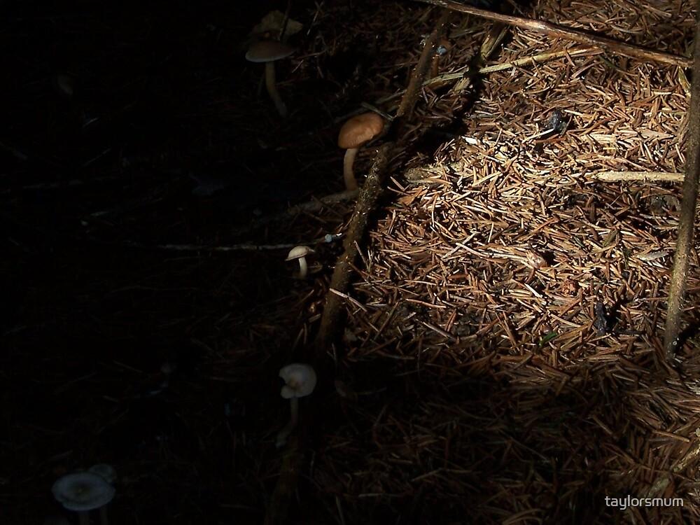 mushroom  by taylorsmum