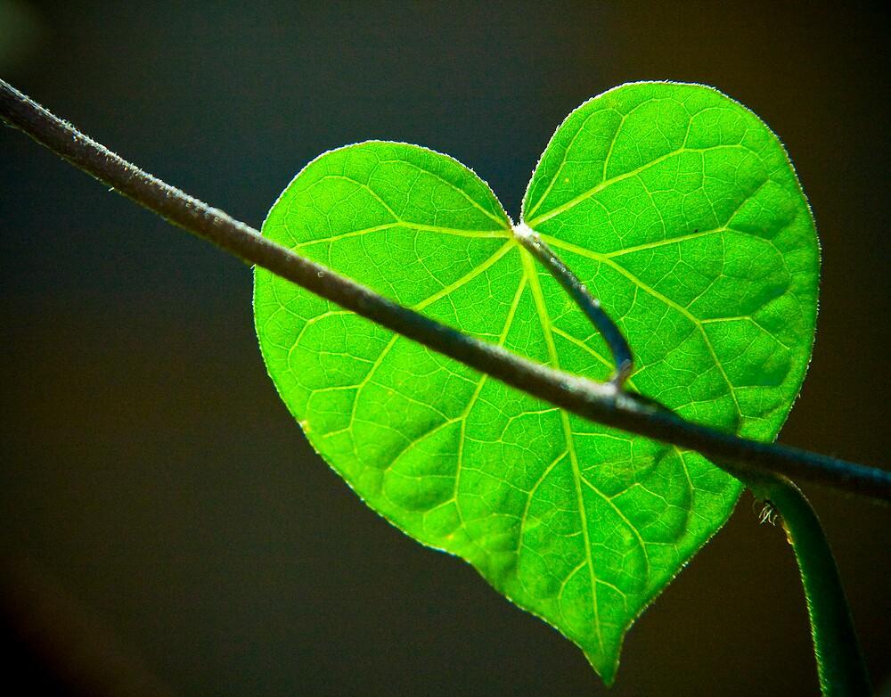 Envious Heart by Patrick Beggan