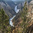 Yellowstone falls by Robyn Lakeman