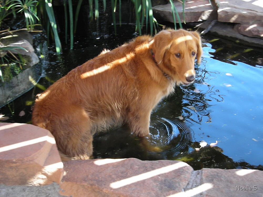 Cooling Off by Noelle S