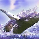 HUMPACK WHALE MAKING HER LAST LEAP TOWARDS THE SUN by miguel