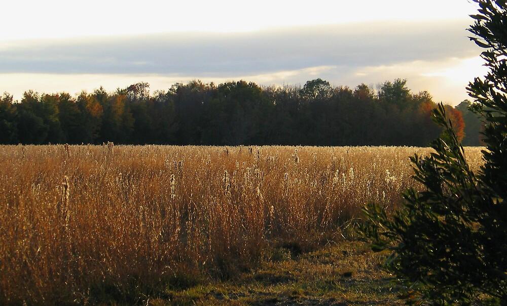 Golden Fields by John  Simmons