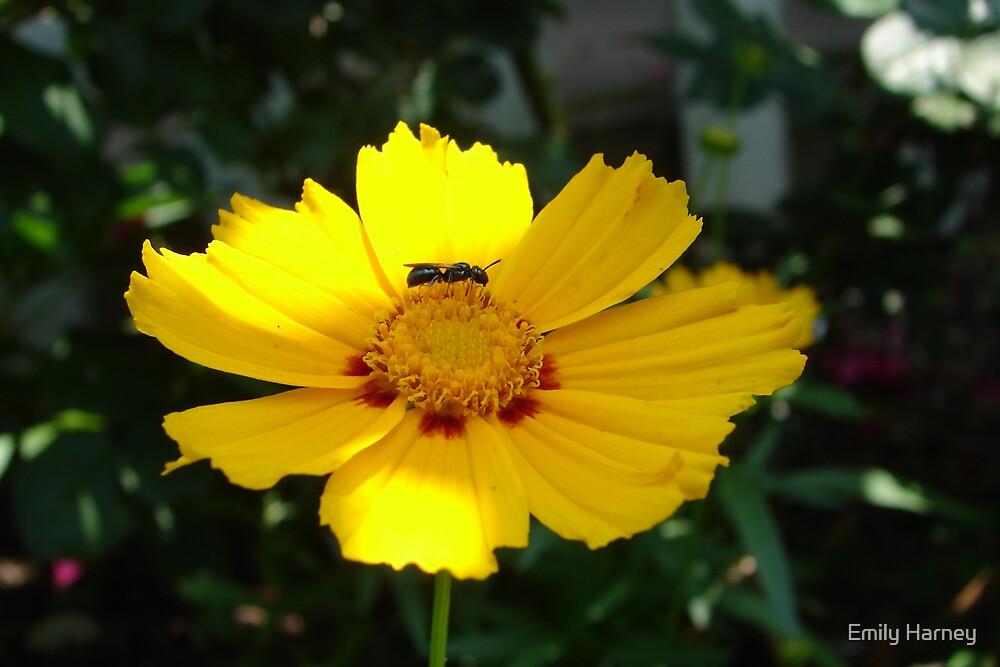 Little Flower by Emily Harney